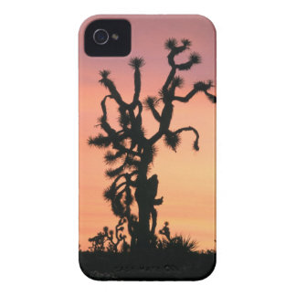 joshua tree, Yucca brevifolia, at sunset in iPhone 4 Cover