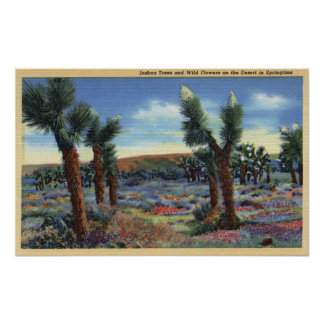 Joshua Trees and Desert Wild Flowers View Posters