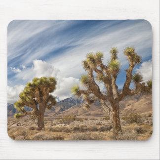 Joshua Trees in Desert Mouse Pad