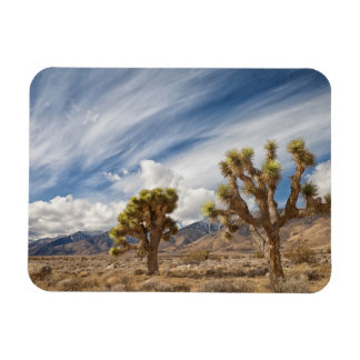Joshua Trees in Desert Rectangle Magnet