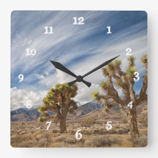 Joshua Trees in Desert Square Wall Clock