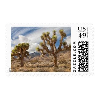 Joshua Trees in Desert Stamp