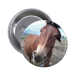 Josie, the funny mule button