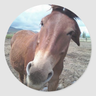 Josie, the funny mule stickers