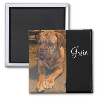 Josie the mastif. Change to your mastif's name 2 Inch Square Magnet