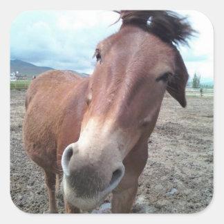 Josie the Mule Square Sticker