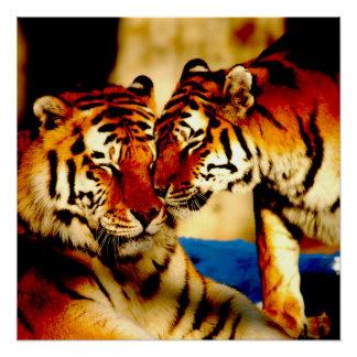 Joven del tigre perfect poster