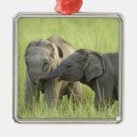 Jóvenes unos del elefante indio/asiático ornamento de reyes magos