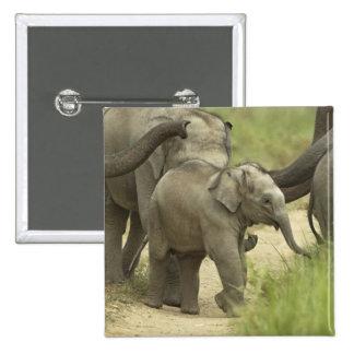 Jóvenes unos del elefante indio asiático en pin
