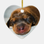 Jovi-Lovebugdoxies-puppy keepsake Christmas Ornament