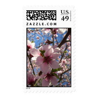 Joy in Bloom (1) Postage Stamps