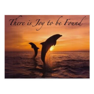 joy in the world of dolphins postcard
