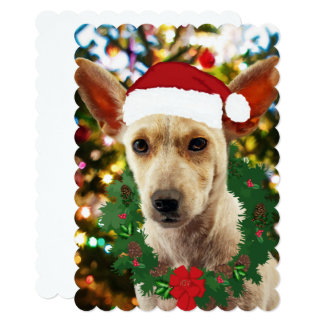 Joy to thee Puppy Card