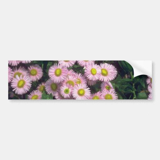 Joya rosada de Rosa, flores (del Erigeron) Etiqueta De Parachoque