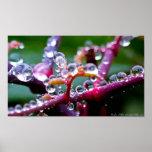 Joyas de la gota de agua de la primavera en el poster