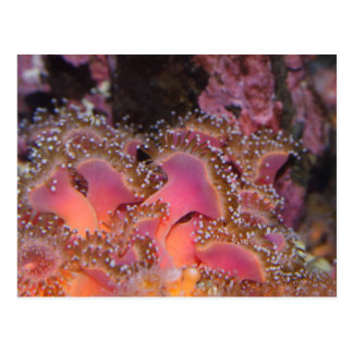 Joyas de la postal marina de las anémonas del mar