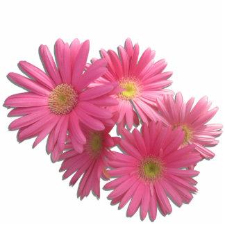 Joyería - Pin - margaritas rosadas oscuras L/F del Esculturas Fotográficas