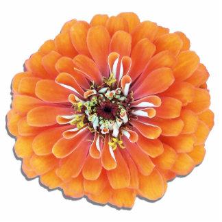 Joyería - Pin - Zinnia anaranjado Pin Fotoescultura