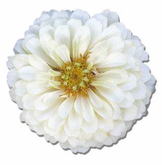 Joyería - Pin - Zinnia blanco Pin Fotoescultura
