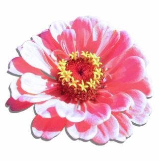 Joyería - Pin - Zinnia rosado Pin Fotoescultura