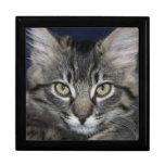 Joyero del gatito de Kimber Caja De Recuerdo