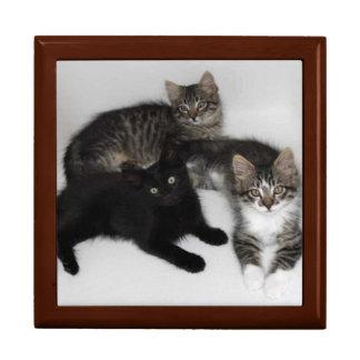 Joyero rescatado de tres gatitos cajas de regalo