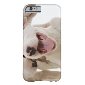 Joyful Bull terriers Barely There iPhone 6 Case