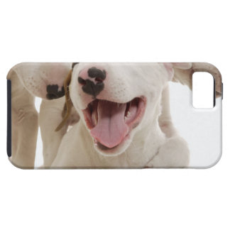Joyful Bull terriers iPhone SE/5/5s Case