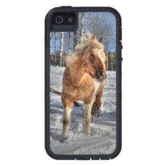 Joyful Palomino Pinto Horse and Snow iPhone SE/5/5s Case