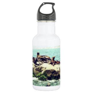 Joyful Seals on a Mexico Beach Jetty Water Bottle