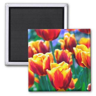 Joyful Summer's Flame coloured Tulips Magnet