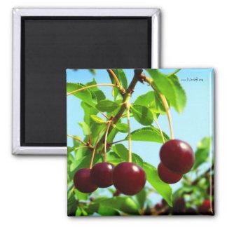 Joys of summer - red cherries magnet