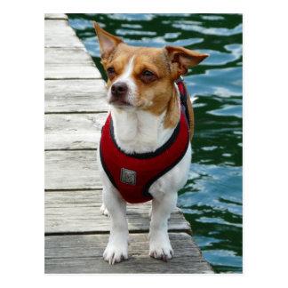 JRT in Red Vest on Boat Dock Postcard