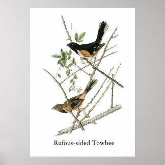 Juan Audubon Rufo-echó a un lado Towhee Póster