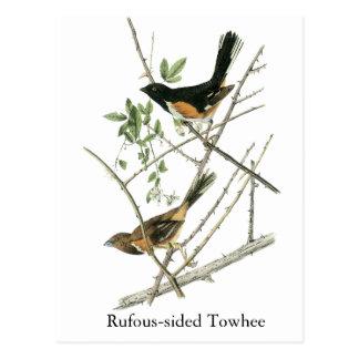 Juan Audubon Rufo-echó a un lado Towhee Tarjeta Postal