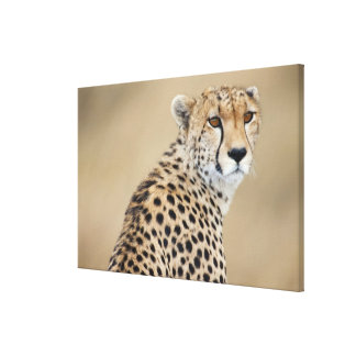 Jubatus alerta del Acinonyx del guepardo), Masai M Impresiones En Lona Estiradas