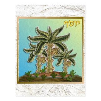 Judaica 12 Tribes Israel Joseph Postcard