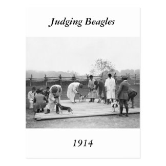 Judging Beagles, 1914 Postcard