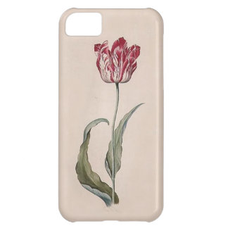 Judith Leyster Tulip iPhone Case