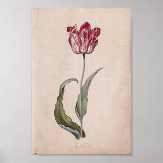 Judith Leyster Tulip Poster