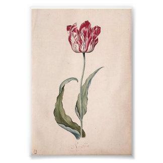 Judith Leyster Tulip Print Photo