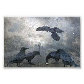 Juego de los cuervos con tiempo perdido fotografías
