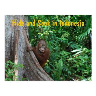 Juego del orangután del escondite tarjeta postal