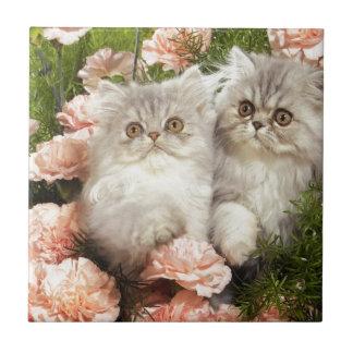 Juego persa de los gatitos en flores rosadas azulejo cuadrado pequeño