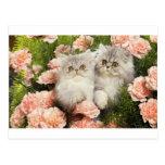 Juego persa de los gatitos en flores rosadas tarjeta postal