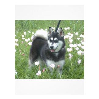 Juegos de Alaska del perro de Klee Kai en los Plantilla De Membrete