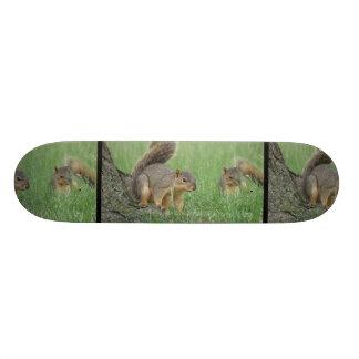 Jugar ardillas tablas de skate
