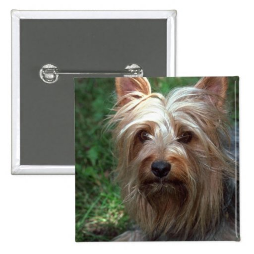 Juguete Terrier sedoso Pin Cuadrada 5 Cm