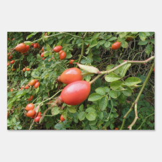 Juicy Red Rose Hips Decorative Yard Sign