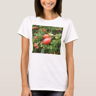 Juicy Red Rose Hips Ladies T Shirt